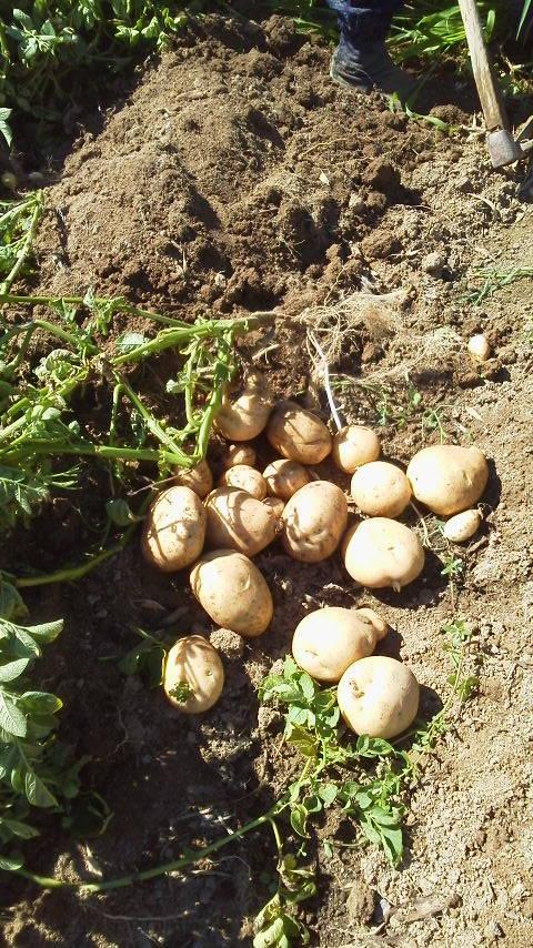 収穫2.jpg