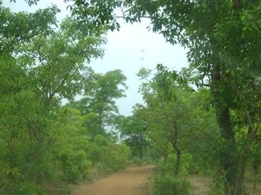 グアンドゥグ指定林内の道路.jpg