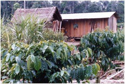 森の中の入植者の家。コーヒーを栽培している。.jpg
