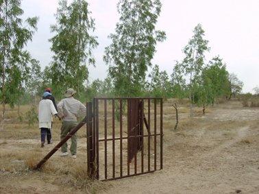 植林地は有刺鉄線で囲い保護.jpg