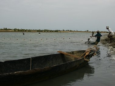 漁場を囲っての漁.jpg