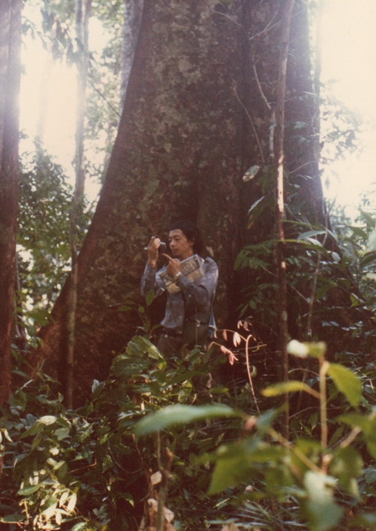 007_50m以上の巨大木.jpg