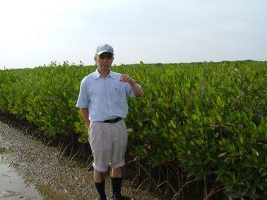 2006年,植林後2年。.jpg