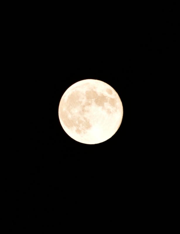 中秋の名月N.jpg