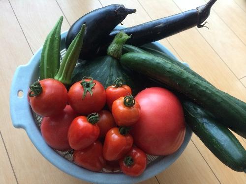 野菜畑003.jpg