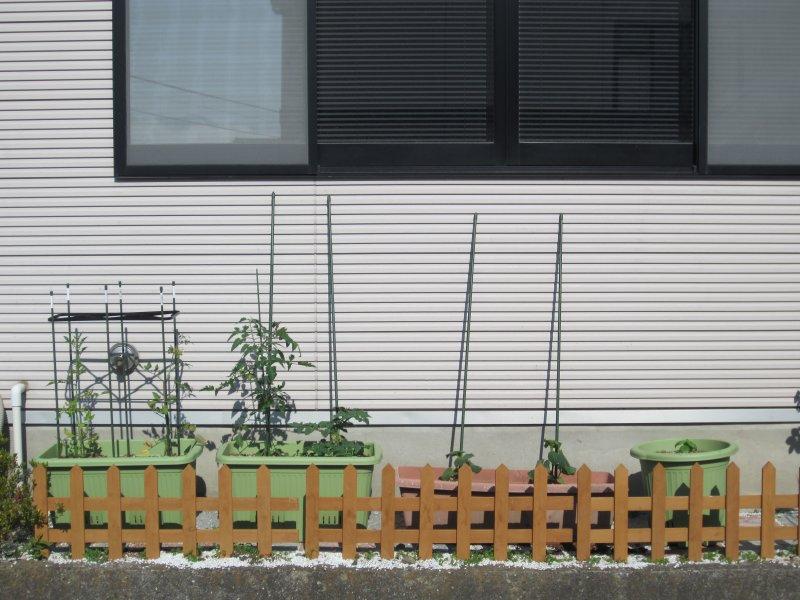20120604saien3.jpg