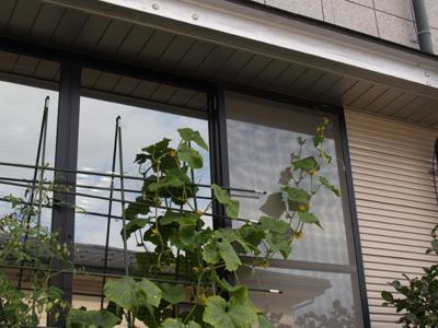 20120801saien2.jpg