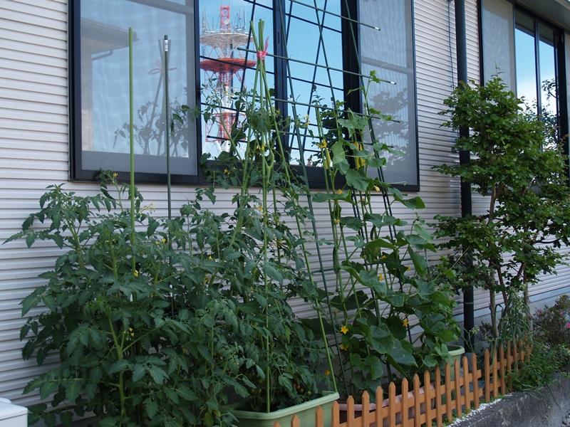7月野菜.JPG