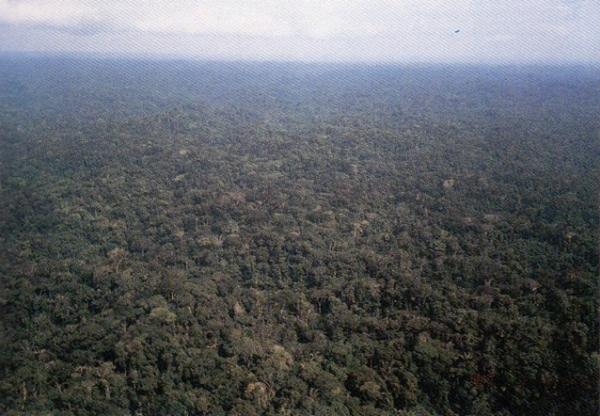 どこまでも続くアマゾン原生林.jpg