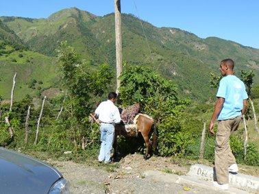 グアジャバル村にて。ラバに.jpg