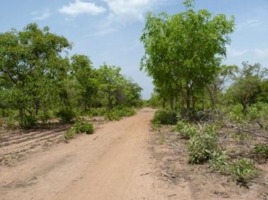 グゥアンドゥグ指定林内の村へ通じる道路.jpg