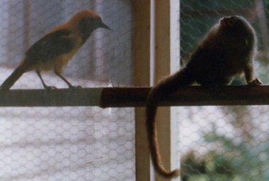 サルと小鳥.jpg