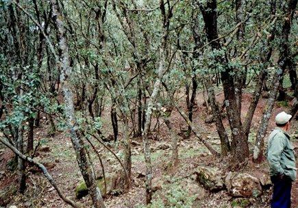 シェーンベールの密林.jpg