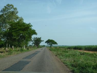 バンフォラを出発してすぐ右側にサトウキビ畑が広がる.jpg