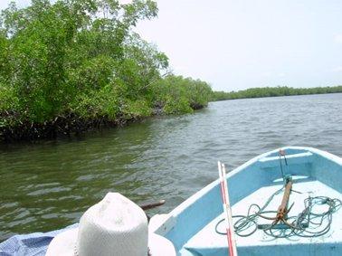 ボートでマングローブ林の調査へ.jpg