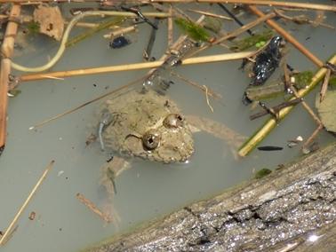 井戸の中の蛙.jpg