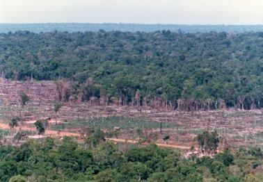 伐採されて牧場や農地に転換されていく森林.jpg