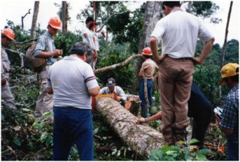 伐採した樹木の大きさを測る。.jpg