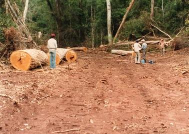 伐採地から森林へ入る。既に多くの森林が伐採されていた。.jpg