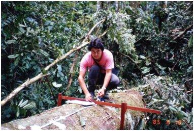 伐採木の直径と樹高を測るメディナ.jpg