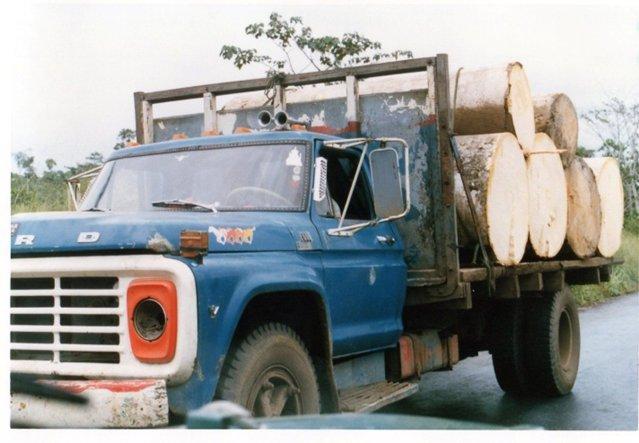 伐採木を積んだトラック.jpg