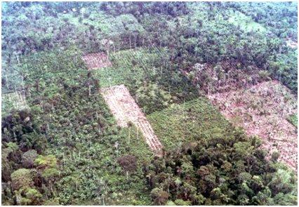 原生林が農地へと変換されていく.jpg
