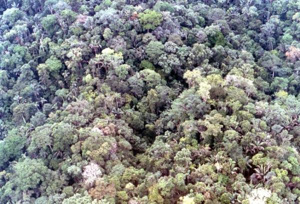 原生林の上空から.jpg