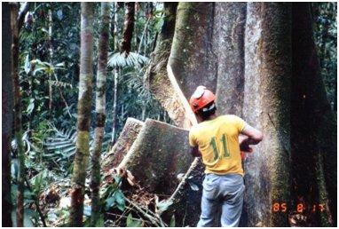 同じ木を反対側から撮影.jpg