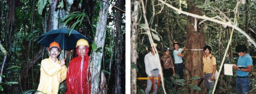 多雨そのものの熱帯雨林_森林調査N.jpg