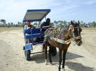 導入した馬車と馬.jpg