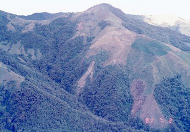 山頂付近まではげ山.jpg
