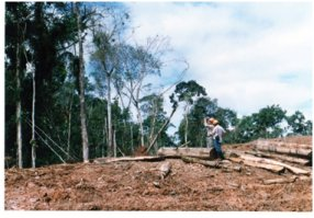 採掘用井戸を作設するため伐採された場所.jpg