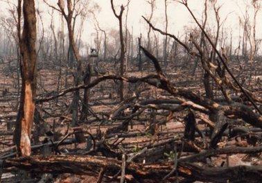 有用樹が伐採された後、.jpg