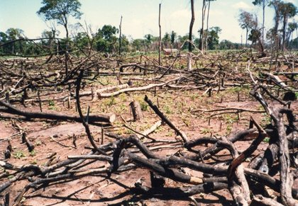 森林が焼かれ農地に転換されていく.jpg