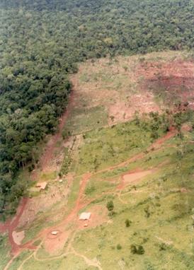 森林を伐採後、牧場などに転換した土地.jpg