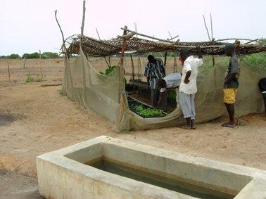 灌水(水やり)用の水溜.jpg