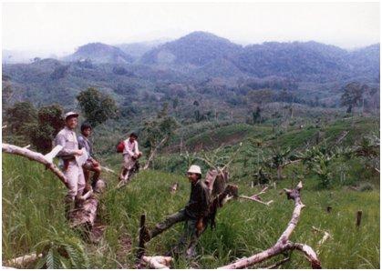 焼畑で減少していく熱帯多雨林.jpg