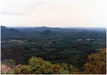 熱帯多雨林の遠景.jpg