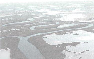 空からみたサルーム・デルタのマングローブ.jpg