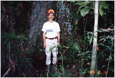 背景の木は板根の幅だけで10m以上もある大木.jpg
