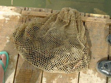 貝類を網に入れて砂・泥.jpg