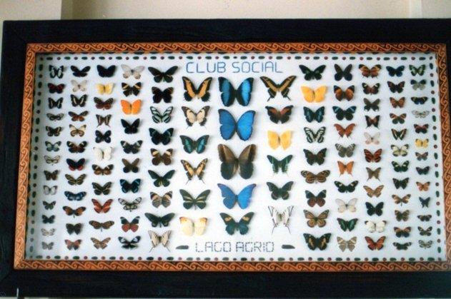 途中の食堂の壁にかけてあった蝶のコレクション.jpg