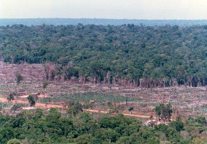 造林予定地ガピバリの森林。.jpg
