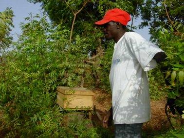 UICNの支援の養蜂箱.jpg